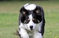 Dos simples rutinas diarias para prevenir las infecciones de oído en mascotas