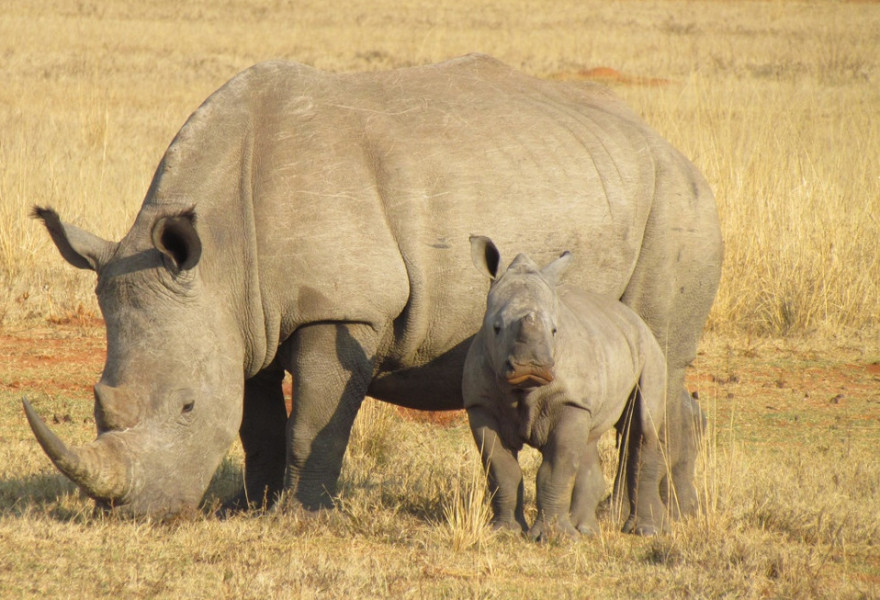 Estos animales están en peligro de extinción y quizá no lo sabíais