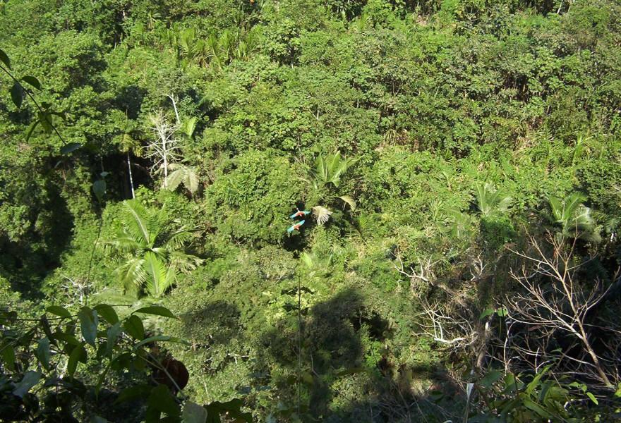 La biodiversidad de Colombia se enriquece con 93 nuevas especies
