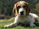 El abandono de mascotas vuelve a suceder ¿Cómo podemos evitarlo?