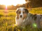 La salud, el motivo por el que los perros se tumban al sol
