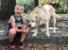 Este niño de siete años ha salvado a mil perros de morir sacrificados