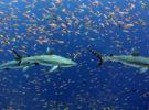 Este análisis de detección de tiburones se ha hecho viral