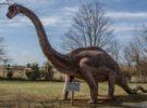 Encontrado el fósil de pie de dinosaurio más grande del mundo