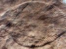 Dickinsonia, el primer animal del planeta