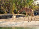 Por qué es peligroso dar comida a los animales del zoo