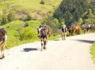 La ganadería también es una solución al impacto medioambiental
