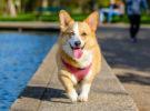 Omega-6, un componente beneficioso para los perros