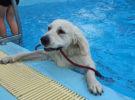 Normas para perros en las piscinas para animales