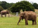 El hambre en los elefantes provoca ataques, y cada vez son más peligrosos