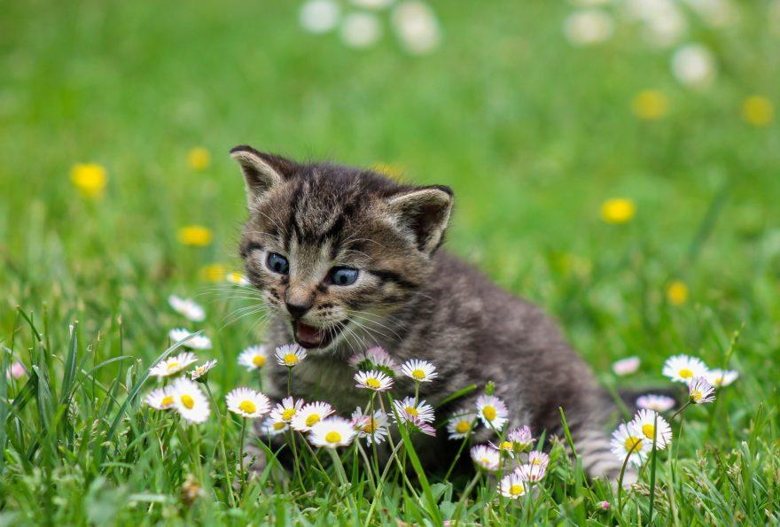 Gato Bebe 2