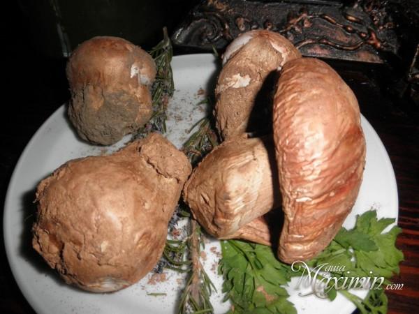 cogumelos-al-natural-600x450