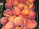 Frutas y Verduras Rodríguez (La Manga del Mar Menor-MU)