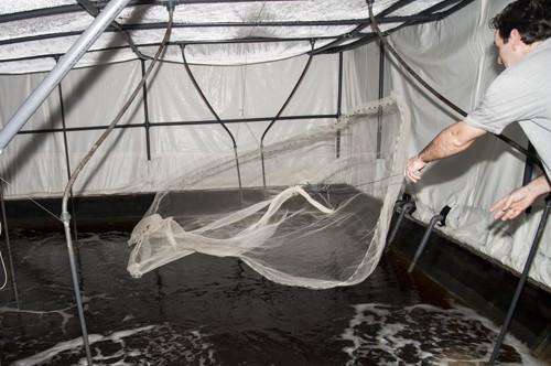 Manuel Poulain pescando langostinos en Gamba Natural
