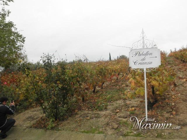 Uva destinada a elaborar vinos de crianza