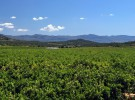 Naranjas Herminia Campo - baja (1)