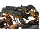 Cetárea Burela – Lo mejor del mar (Burela-LU)