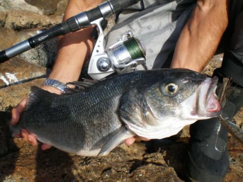 pescado salvaje con chapa
