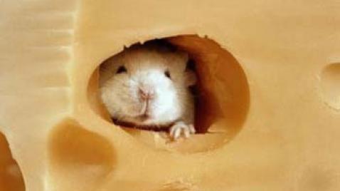 queso con raton