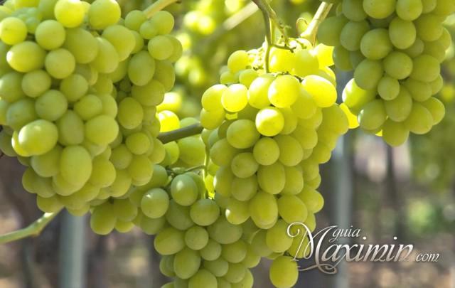 uvas blancas racimo