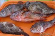 Pescando en Moraira – Subasta en La Lonja