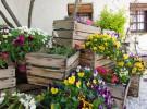 Casa Elena abre sus terrazas con el buen tiempo (Cabañas de la Sagra – TO)