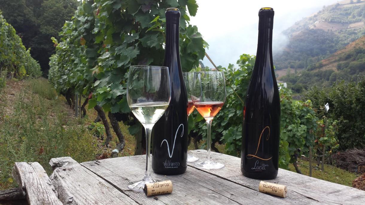 Vitheras – Viticultores Heroicos Asturianos (Carballo-Cangas del Narcea-AS)