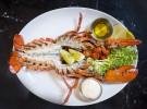 Lobster Grilled (Dingo)