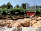 Los vinos de Formentera el maridaje perfecto (Formentera – IB)