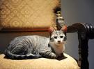 George W. Bush adopta un gato