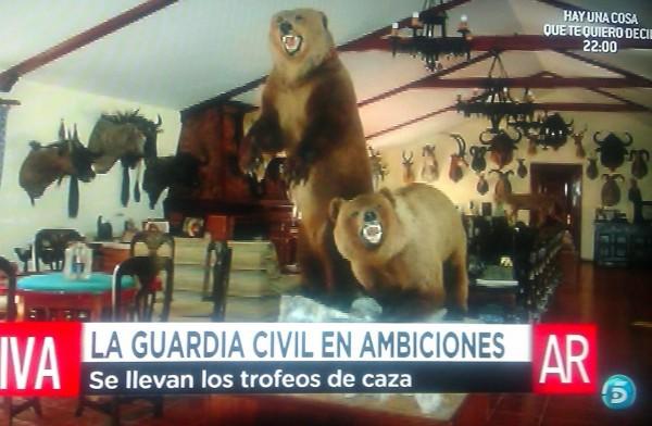 La Guardía Civil incauta a Jesulín de Ubrique dos osos pardos, un jaguar y una cabeza de cebra