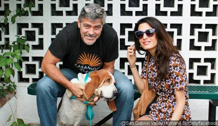 Amal Clooney y George Clooney serán padres de gemelos según In Touch