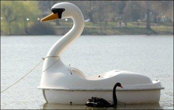 cisne-enamorado