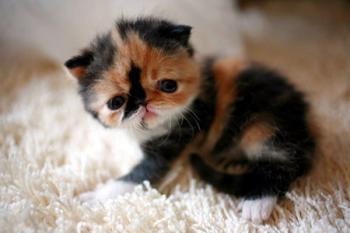 Gatito simpatico