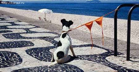 perro_cadena_brasier