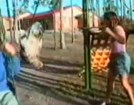 coleccion_graciosos_videos_mascotas