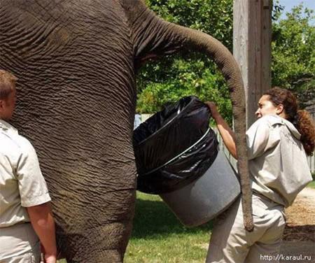 elefante_enfermo_zoologico_muestra_heces