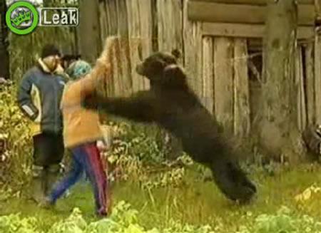 oso_mascota_alimentar_ataque
