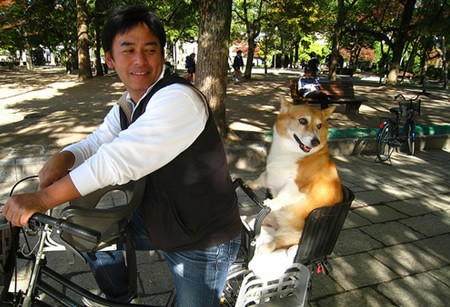 perro_mascota_bici_montado