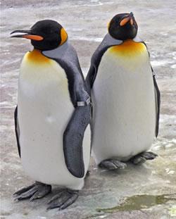 pinguinos_gay_roban_huevo_castigados
