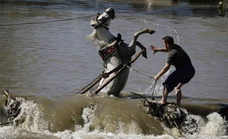 rescate_caballo_albania
