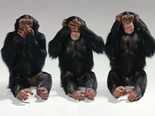 monos asustados