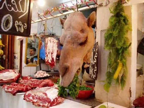 carne_camello_vendida_australia