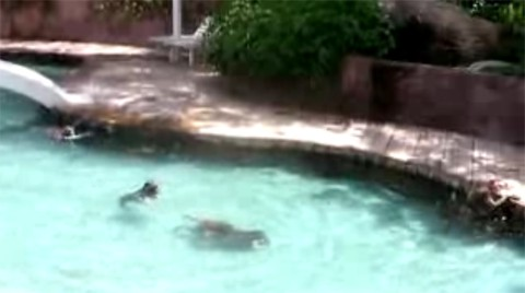 clavado_piscina_mono_fiesta