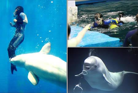 Buzo salvado por ballena