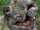 Pareidolia en árboles: Esta vez es natural