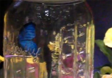 ChouChou_mariposa-robot_estara_disponible_mundo