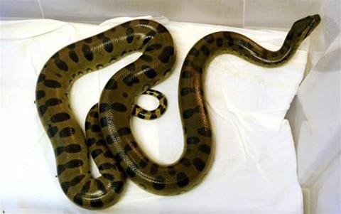 anaconda-bano-casa-inodoro