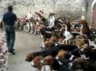 Denigrante forma de alimentar mascotas