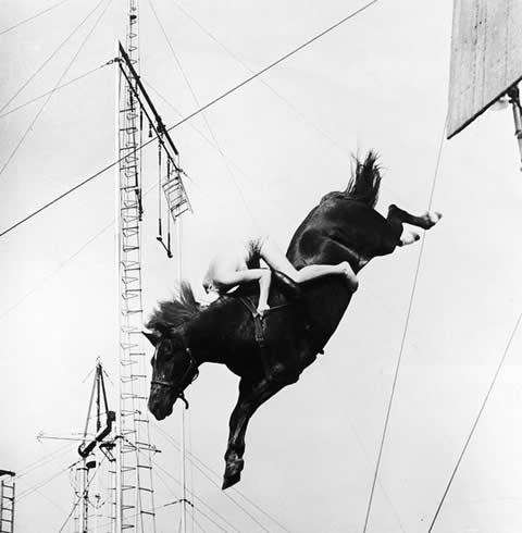 high-diving-horse-salto-alto-caballos